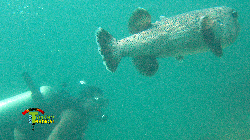 Scuba diving at Arraial do Cabo - Brazil
